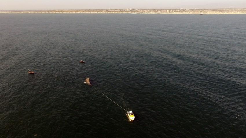 04-21-2017-whale-newport-beach-1