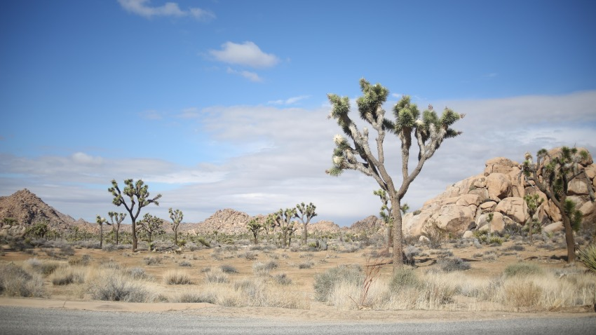 Joshua Tree Campground Access Limited Due To Storm Nbc Los