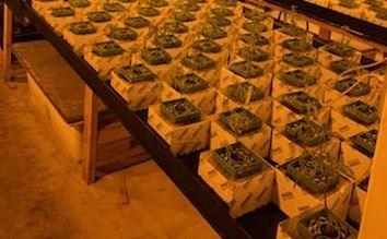 10.28.18_La-Mirada-Pot-Grow