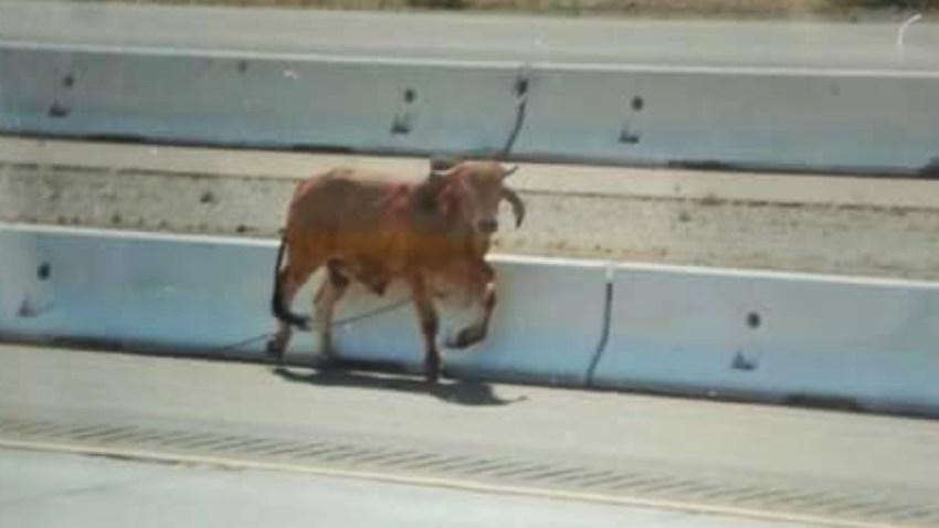 150516-bull-15-freeway-saturday-may-16