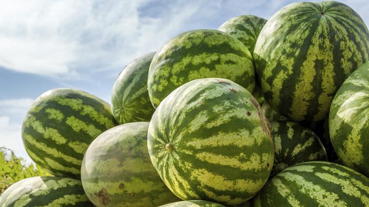 Watermelon Whodunits