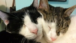 [UGCNY-CJ-pets]Boo & Lily adopted shelter cats