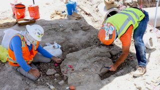 Paleontologists excavate fossils found during construction of SR-11/Otay Mesa East.