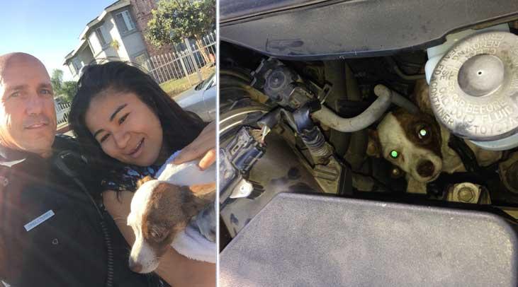 4-28-15-dog trapped car saved (1)