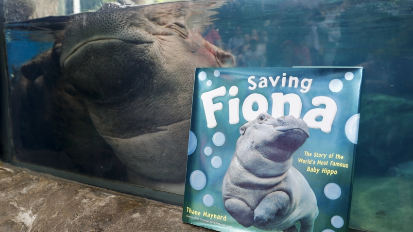 Premature Hippo Teaching