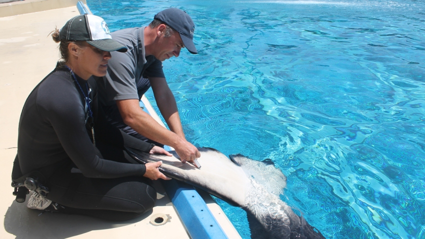SeaWorld Orca Data