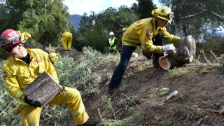 A fire prevention crew hauls away sections of a tree