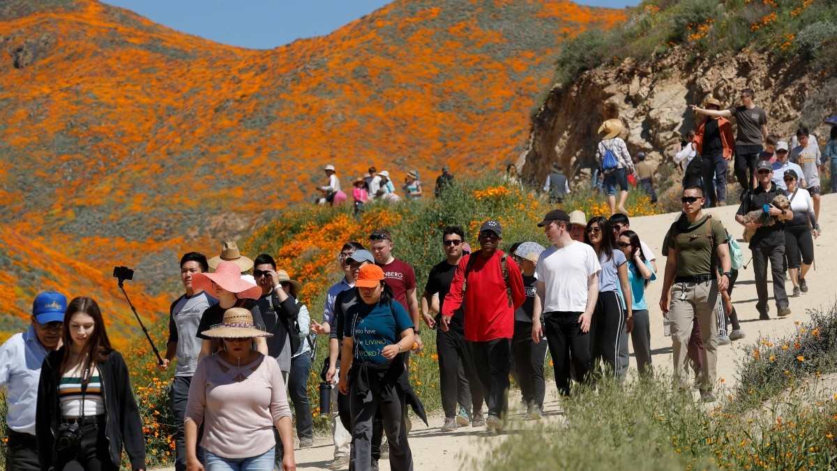 Dry Winter May Mean No Beloved Superbloom, and Locals Aren't Hating it