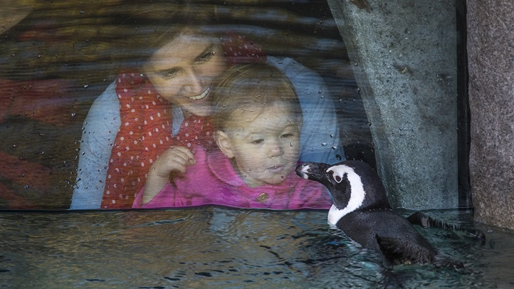Taking a Peek at New Penguins at San Diego Zoo