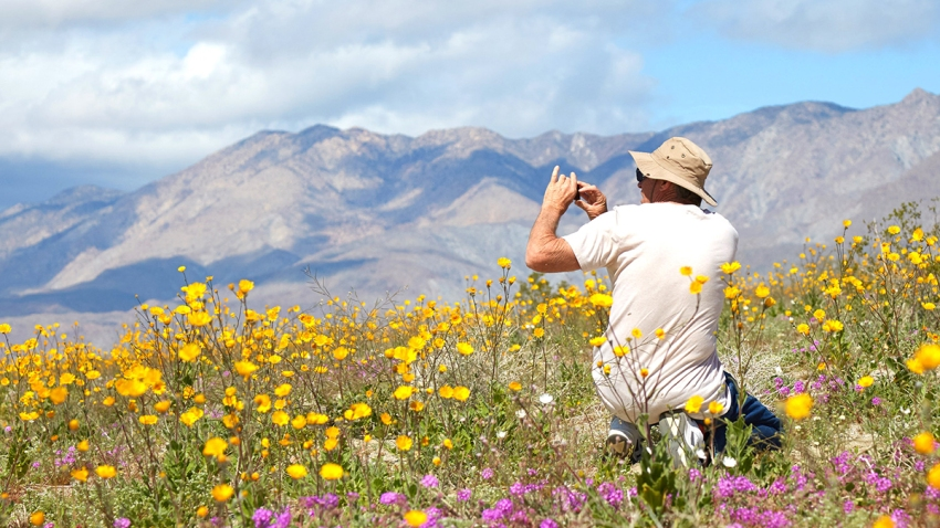 Anza-Borrego-Desert-Blooms-March-2019-ABDNHA-11