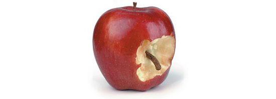 Bad-Rotten-Apple-2-thumb-550xauto-63100