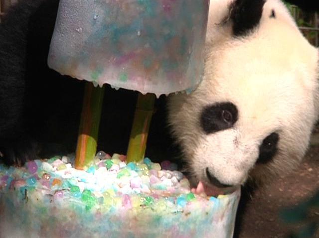 Birthday Panda San Diego