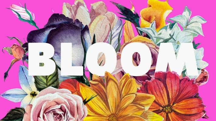 Bloom533434