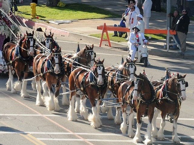 BudweiserClydesdales_95522944