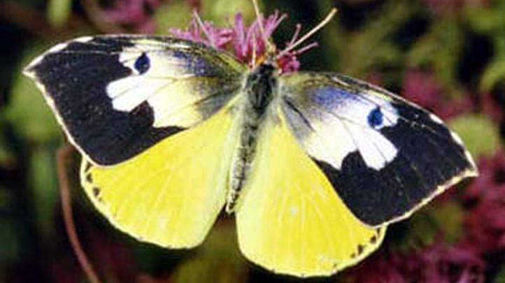ButterflyPavilionNHM2011
