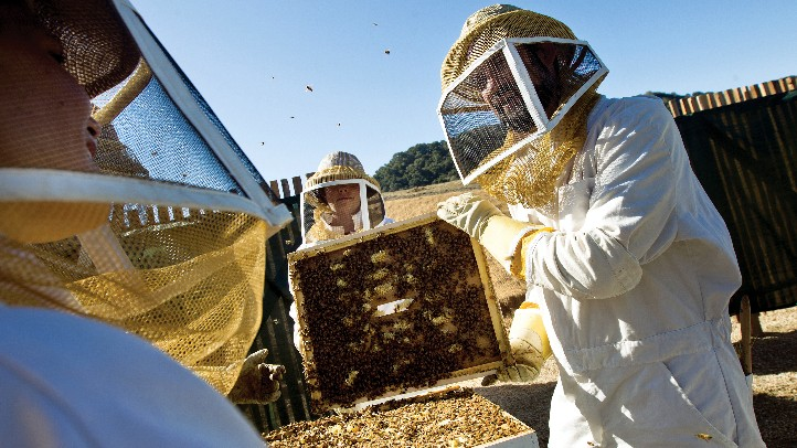 CarmelValleyRanchBees