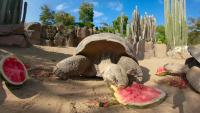 San Diego Zoo Brings Wildlife to Kids With Digital Spring Break