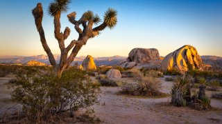This is a photo taken at sunset in Joshua Tree National Park.