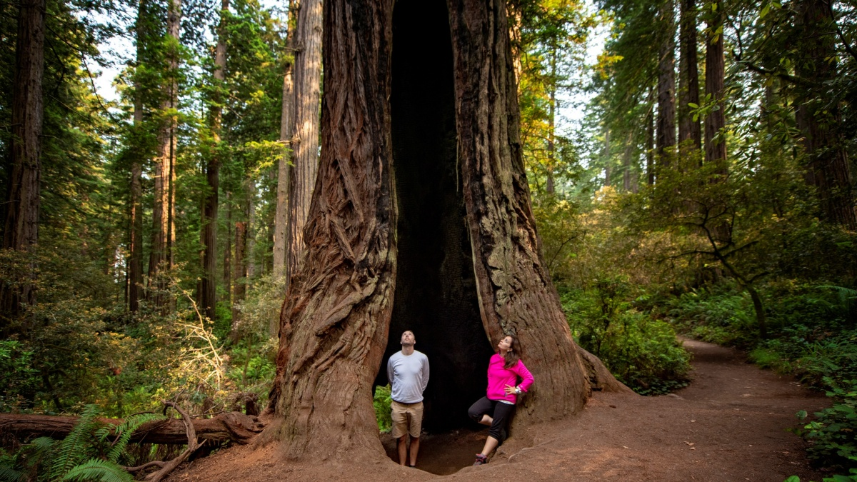 The Redwoods Begin to Reopen – NBC Los Angeles