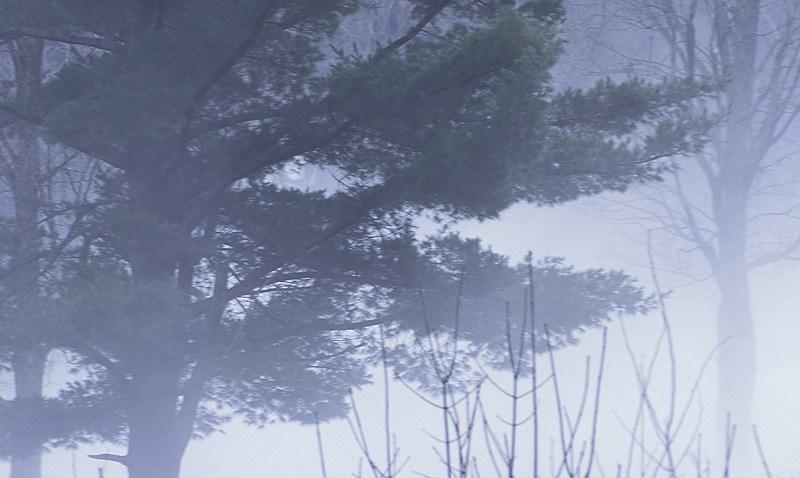 Haunted_House Fog Tree