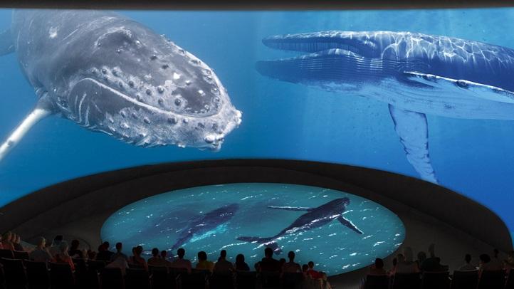 HondaPacificVisionsTheater_Whales_CourtesyofAquariumofthePacific