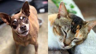 LA Animal Services East Valley Animal Shelter Dog-horz