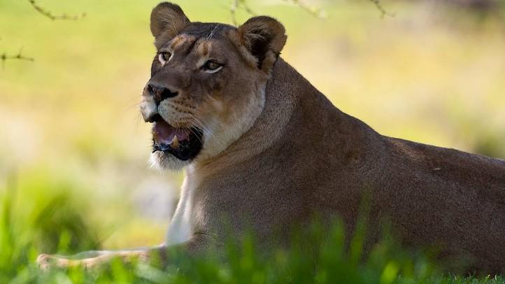 LionCampSD