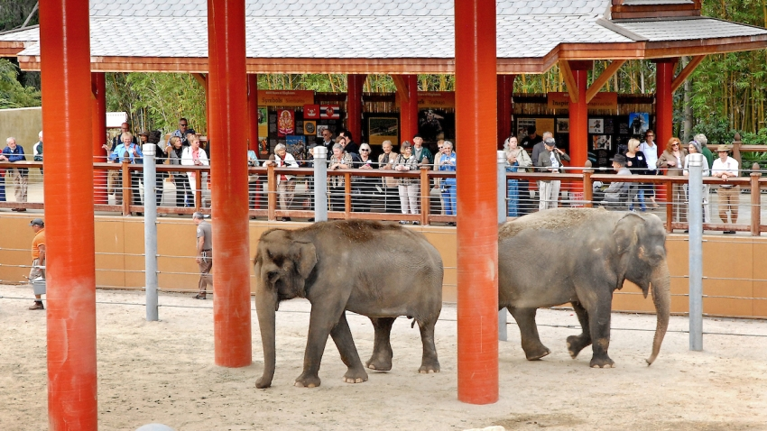La Zoo Will Remain Closed Until At Least July Nbc Los Angeles