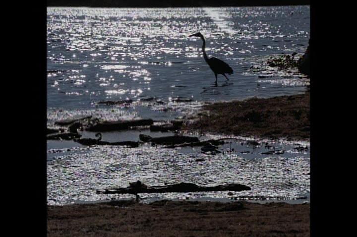 Malibu Lagoon1