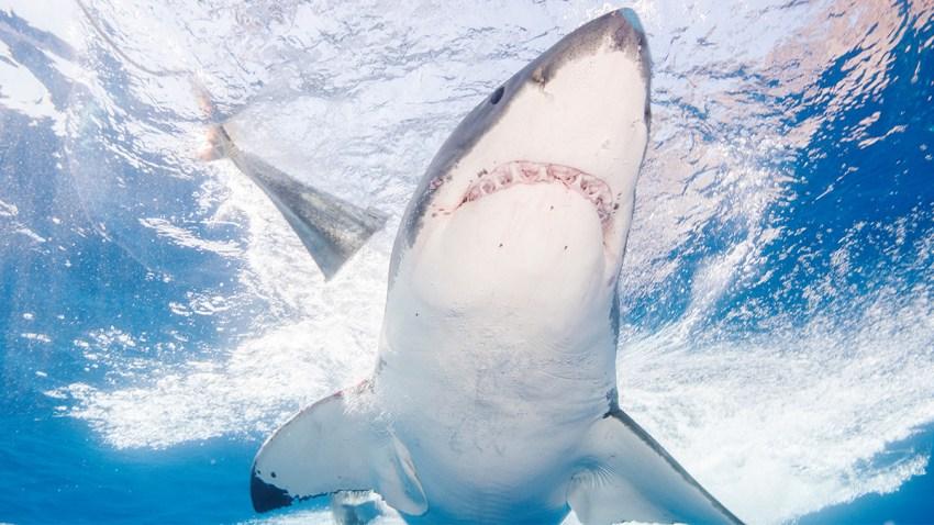 Nov 9 19 Sharks FL Coast Thumb