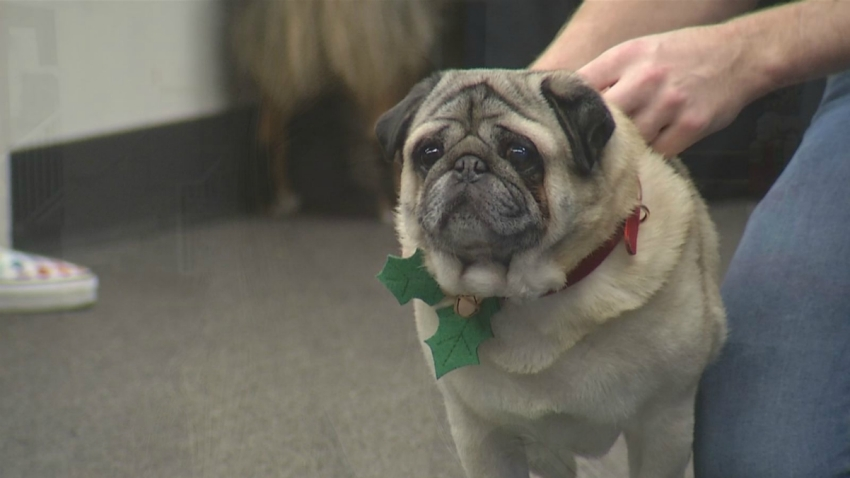 Buying A Puppy For Christmas Beware Of Scammers City Officials