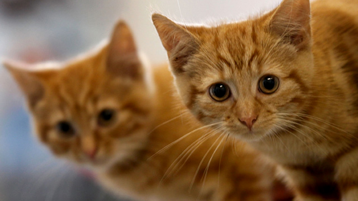 PHI kittens 041311