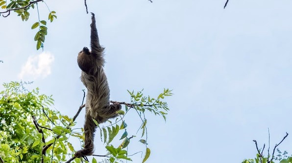 Photo 7_ Sloth Reach