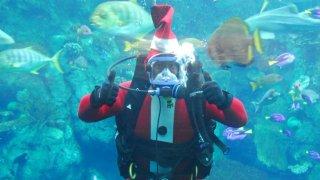 Santa Diver 018765