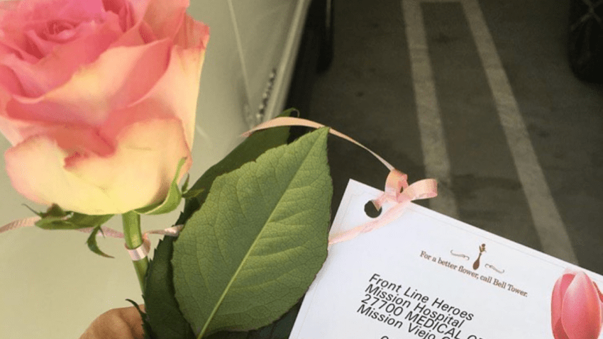 a pink rose and a card