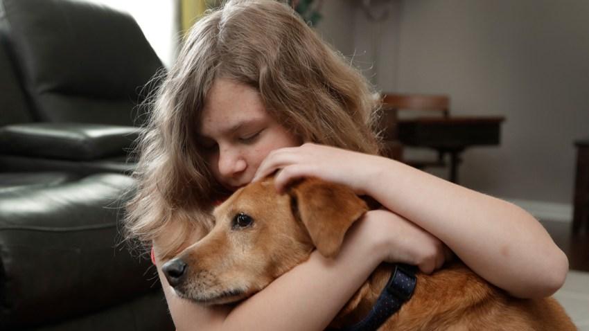 Service Dogs Regulation