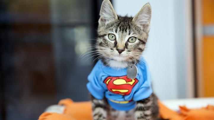 SuperheroKittens4013sak