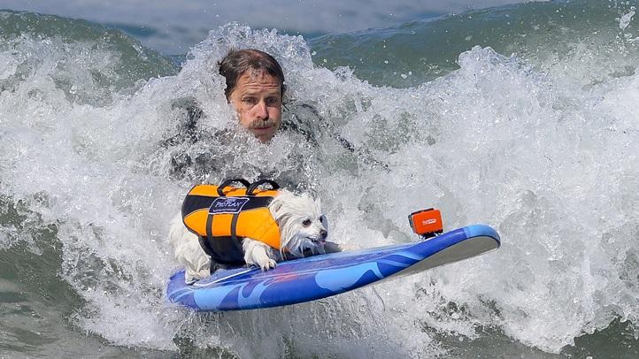 SurfDogWesternRegionalFeature