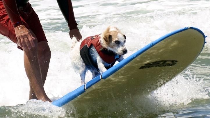 SurfDogandMan