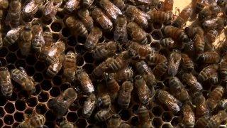 US-NY-Zombie-Bees-sm.jpg
