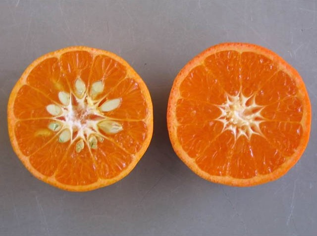 W. Murcott mandarin and Tango
