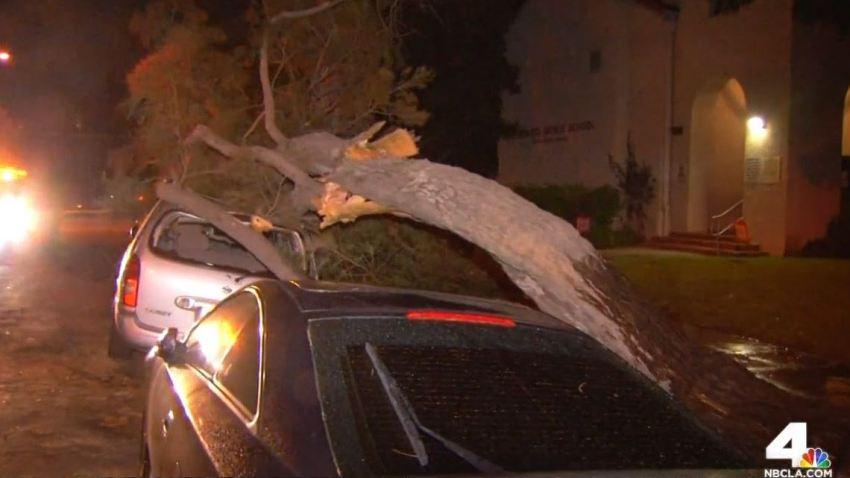 Tree Crashes Onto Cars