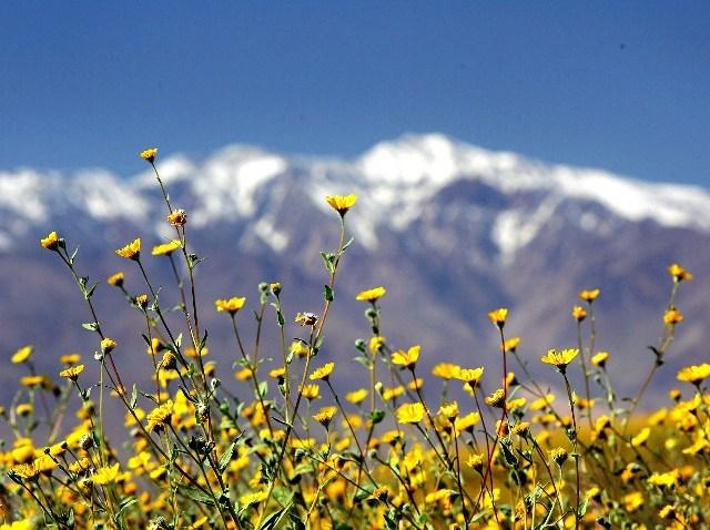 WildflowersDV_52383469
