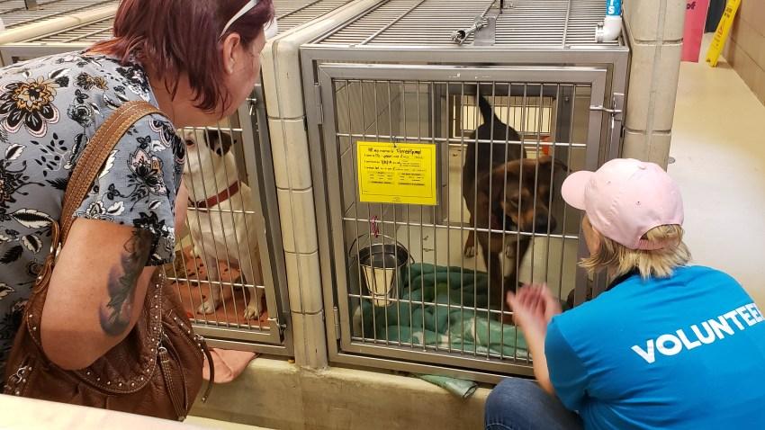 [EXTERNAL] Fwd: Humane Society Animal Shelter- Munster, IN
