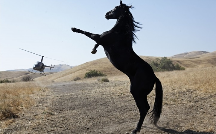 afifest_wildhorses