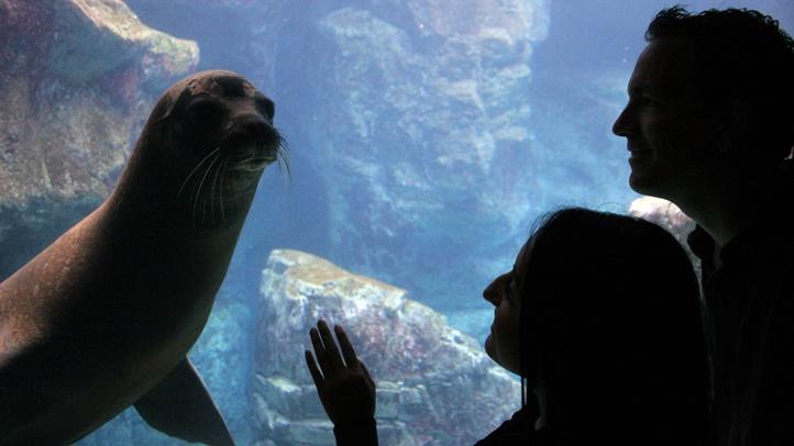 aquariumlaterhours2015