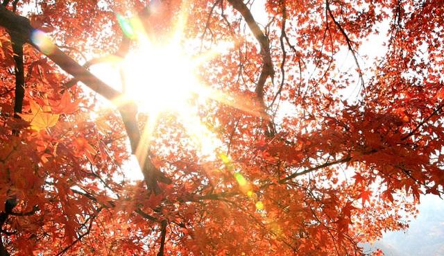 autumnsunshinegetty