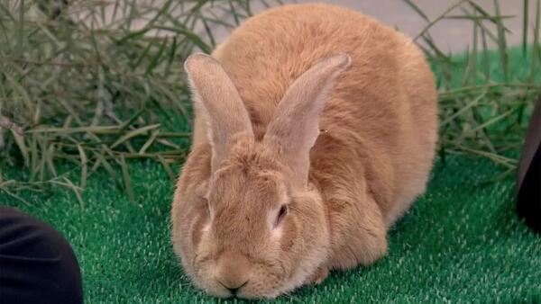 "[UGCPHI-CJ]""@NBCPhiladelphia: Rabbits can no longer be prizes at carnival: http://t.co/6fPDLHjqtx http://t.co/V"