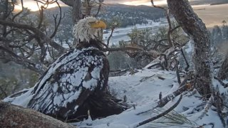 bald-eagle-cam-190528