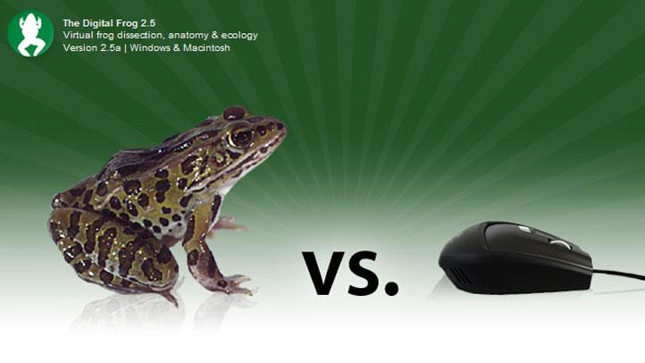 digital-frog
